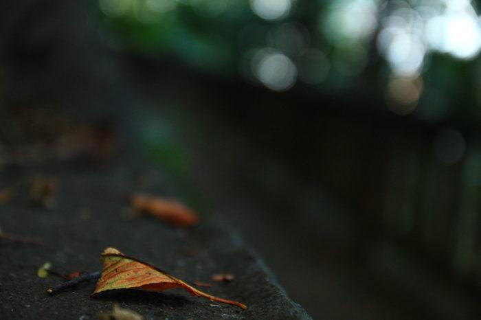飛鳥山に秋の訪れ