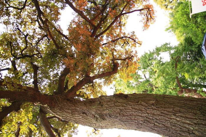 七社神社の木
