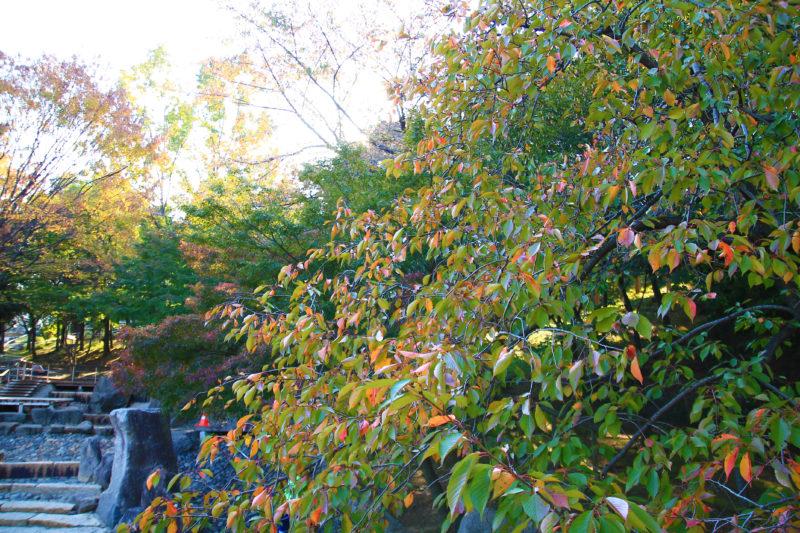 清水坂公園の紅葉