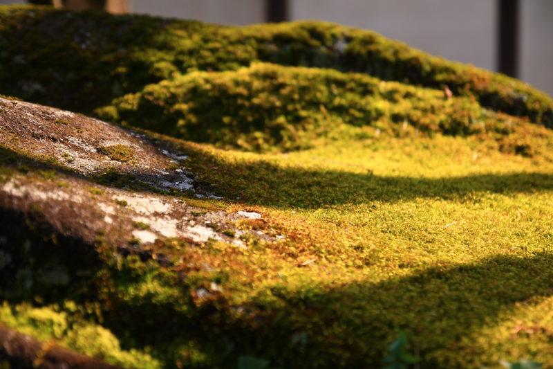 名主の滝公園 苔
