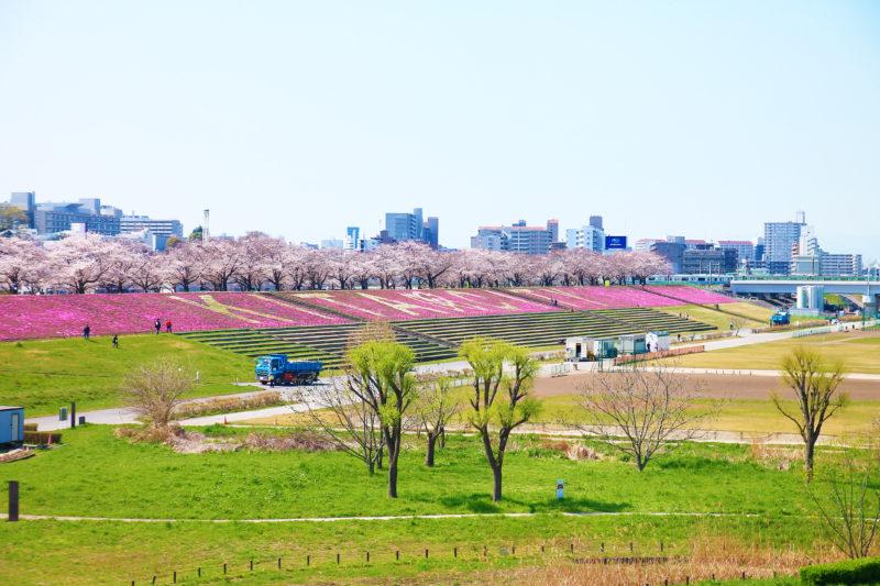 新荒川大橋緑地の芝桜