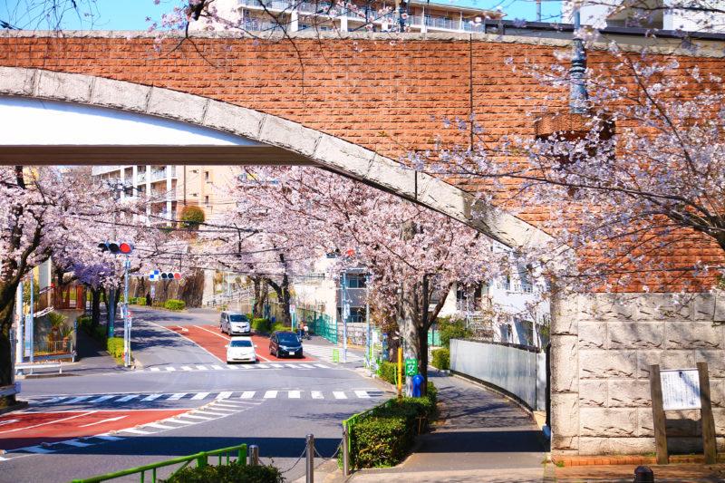 赤羽桜並木通り 桜