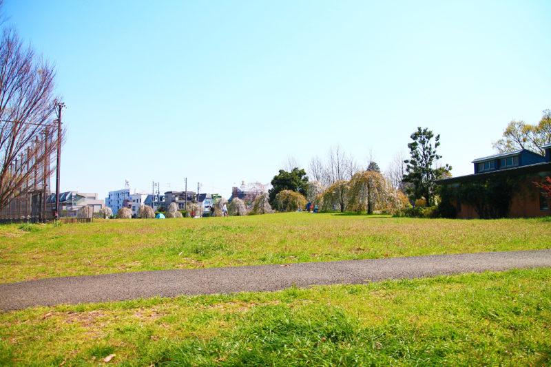 赤羽自然観察公園 桜