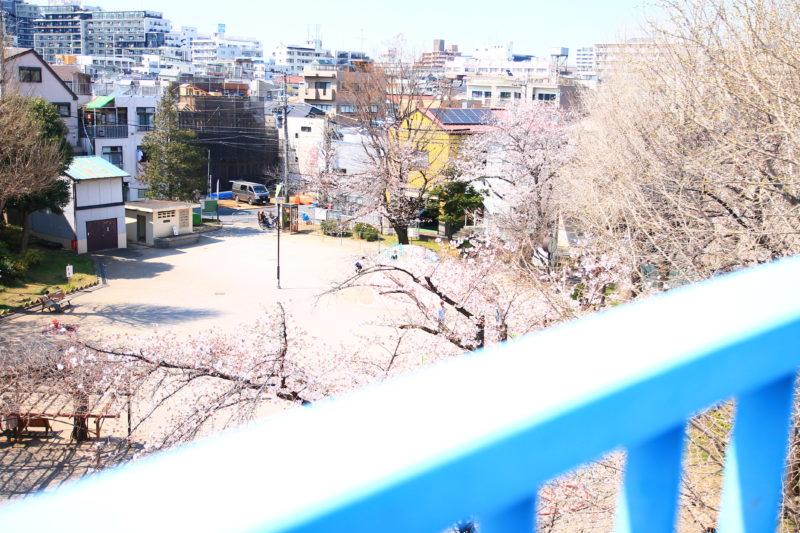 島下公園 桜