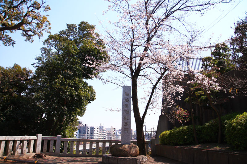 八幡神社 桜