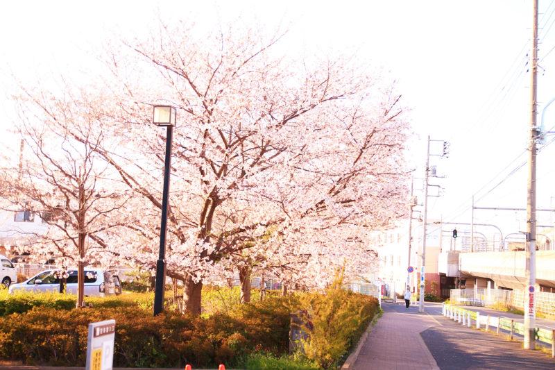 清水坂あじさい荘 桜