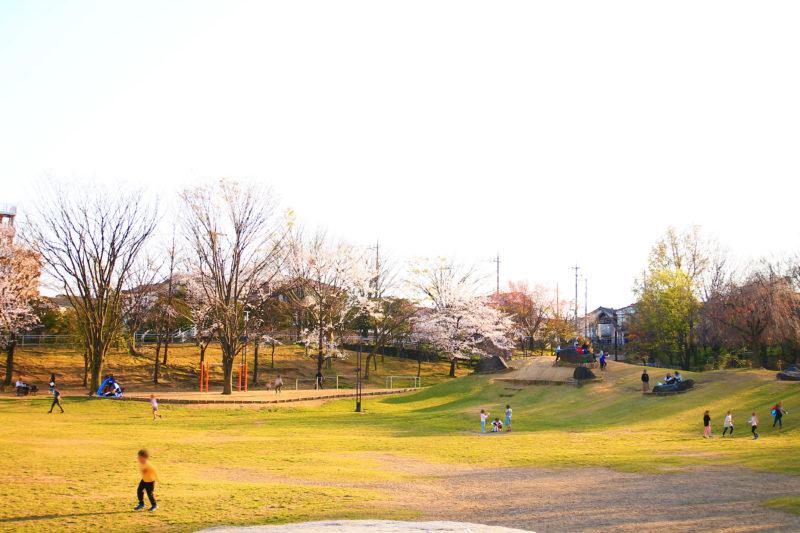 清水坂公園 桜