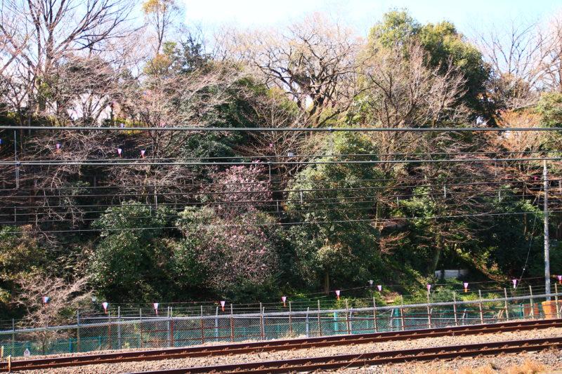 JR王子駅からの飛鳥山