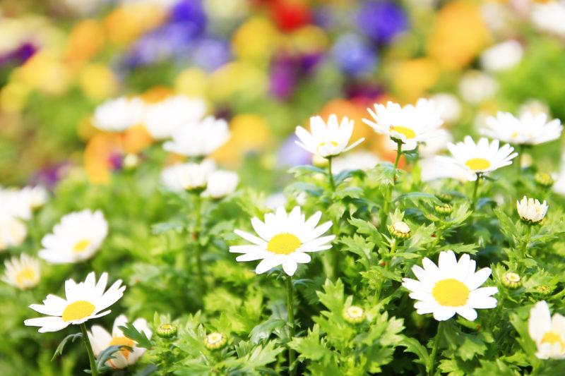 飛鳥山の花壇