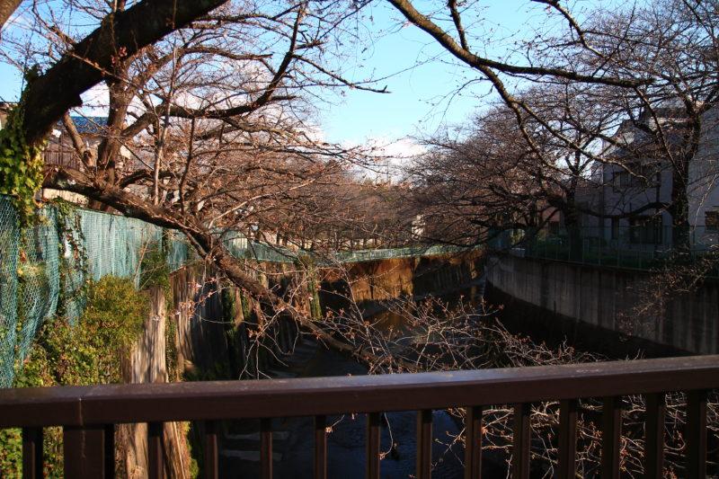 石神井川 かなざわ橋付近