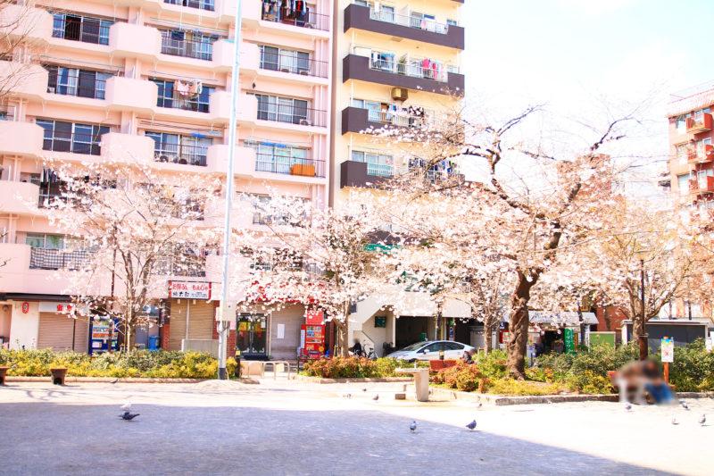 王子 柳田公園 鳩