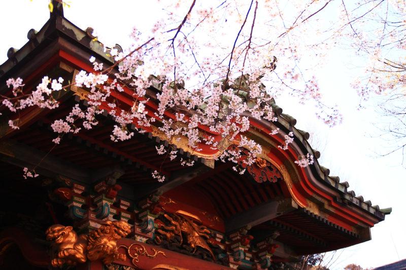 王子稲荷神社 桜