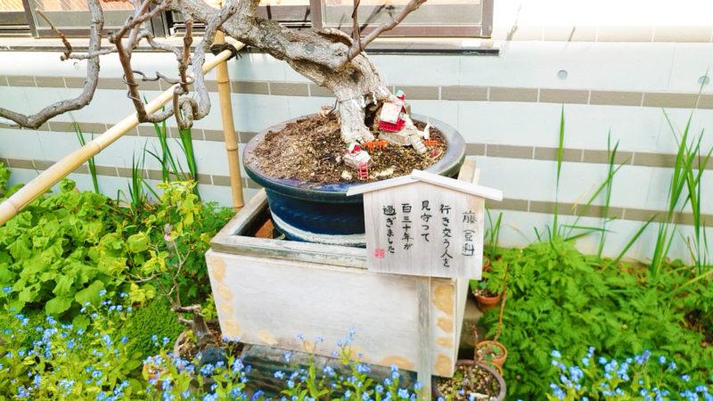 王子 石鍋商店の店頭にある和庭
