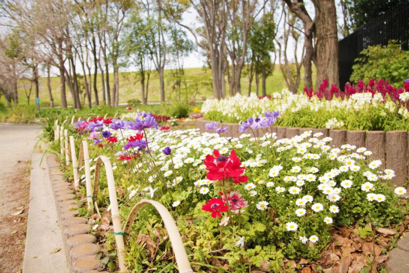 浮間公園 花壇