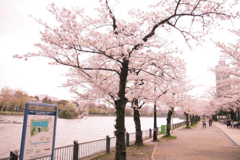 浮間公園の桜