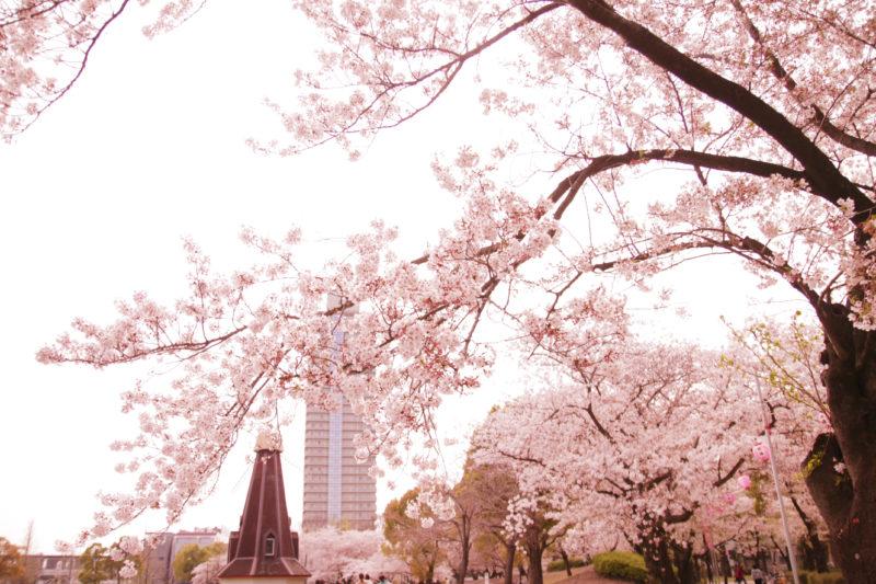 浮間公園と桜