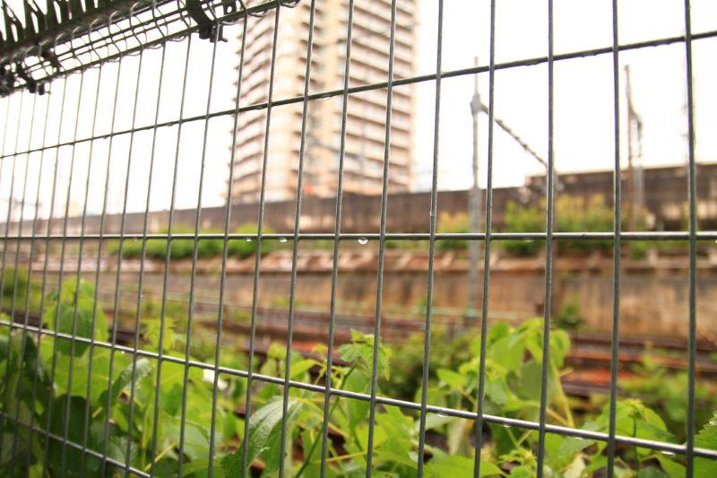 紫陽花の道の線路の柵