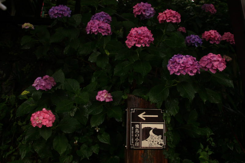 紫陽花の道の看板