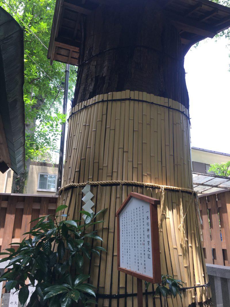 七社神社 天祖神社 一本杉明神