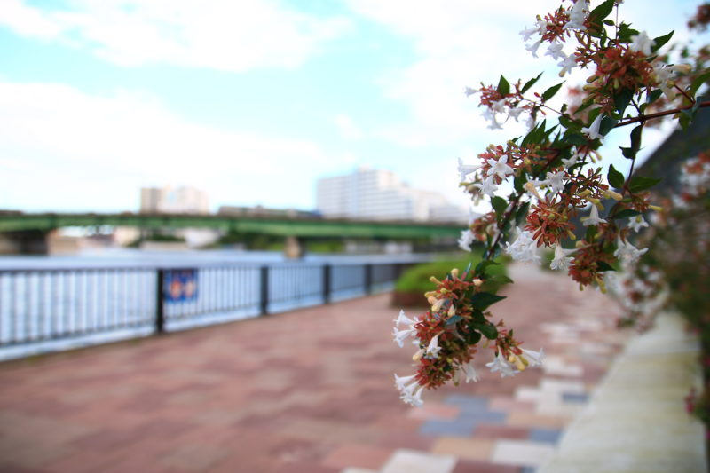 隅田川 遊歩道