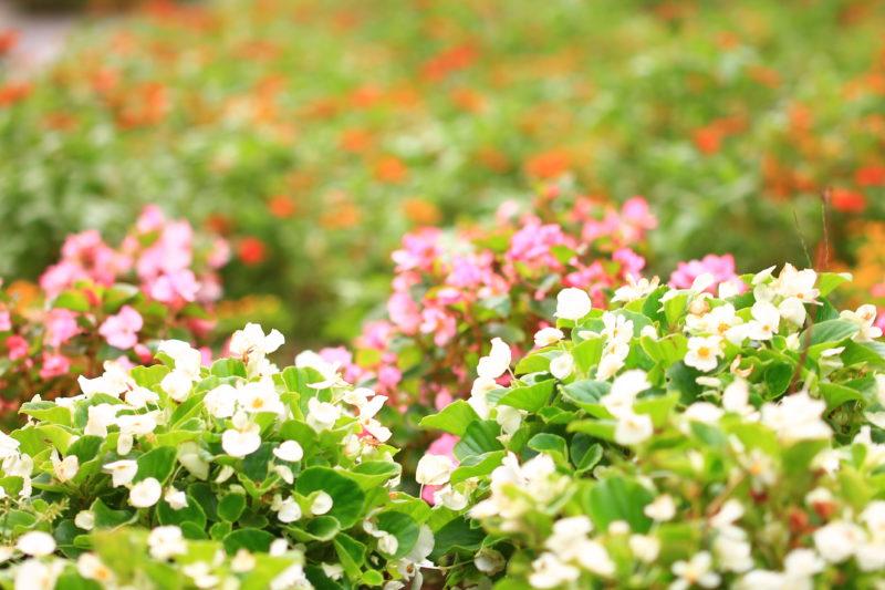 赤羽南口ぱぱす前 花壇