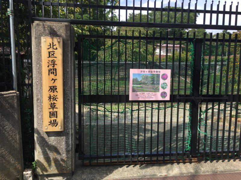 浮間ヶ原桜草圃場