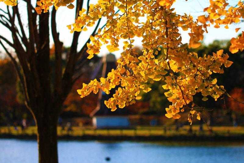 浮間公園 紅葉