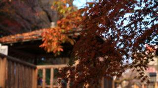 音無親水公園 紅葉