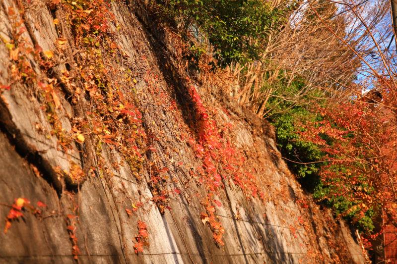 平塚神社 紅葉