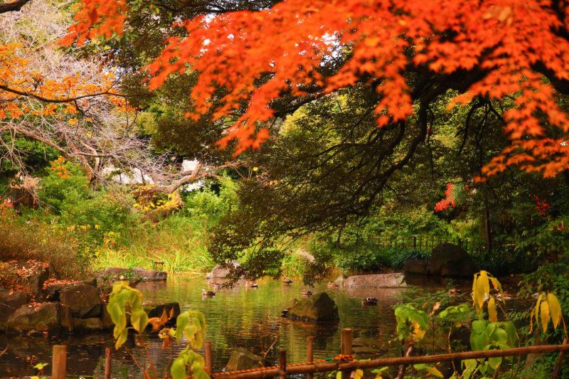 名主の公園 紅葉