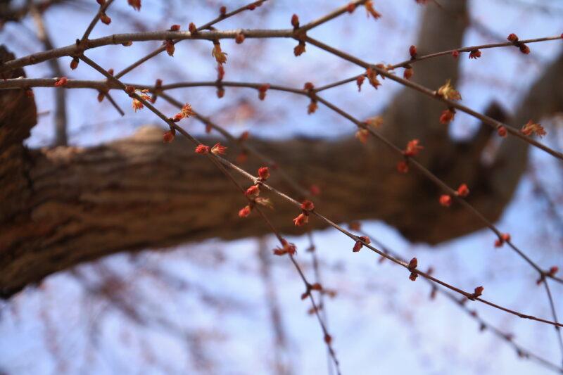 浮間公園 桜