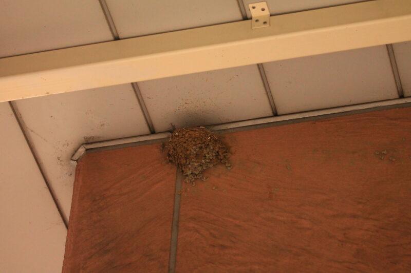 赤羽 ツバメの巣