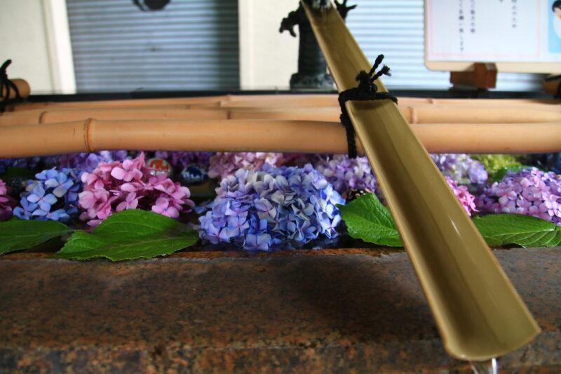 紫陽花 手水舎