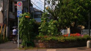 志茂町公園
